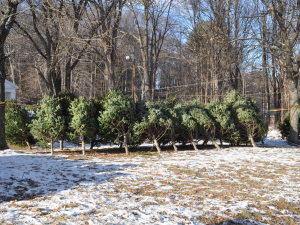 stacked Christmas trees for sale