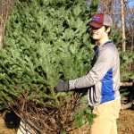 Teenage boy wearing khaki pants, gray and blue long-sleeved shirt, a maroon and gray baseball cap, and black gloves. Boy is holding an undecorated Christmas tree and moving it onto place for sale.